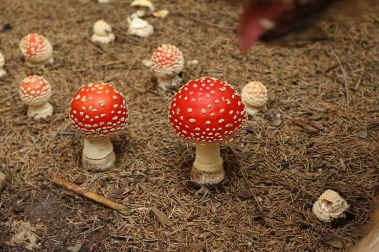 14 houbičky, houbičky, houbičky....