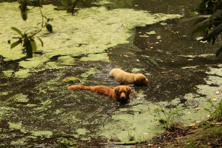 17Voda - úžasné - čím špinavější a smradlavější, tím lepší! To ví přece každý pes.(a páníček také...)