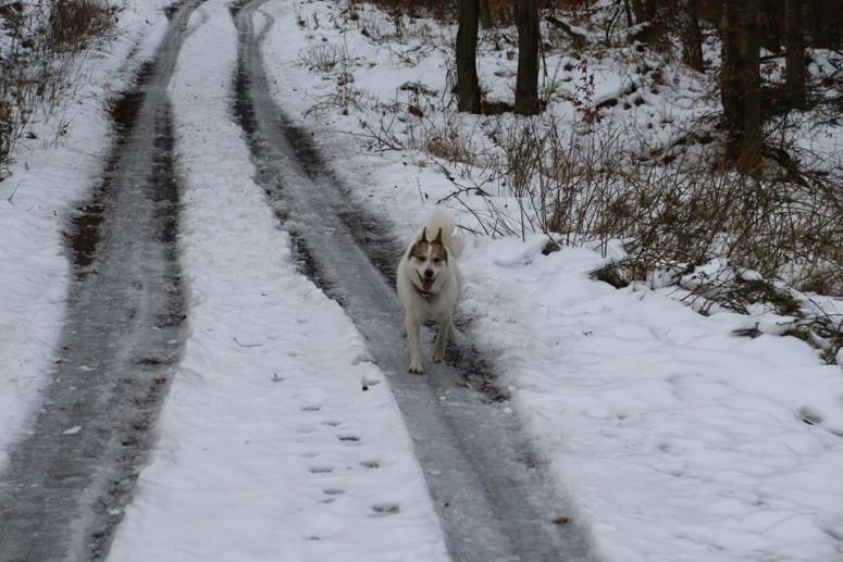 24 Bonnie byla ze sněhu nadšená..