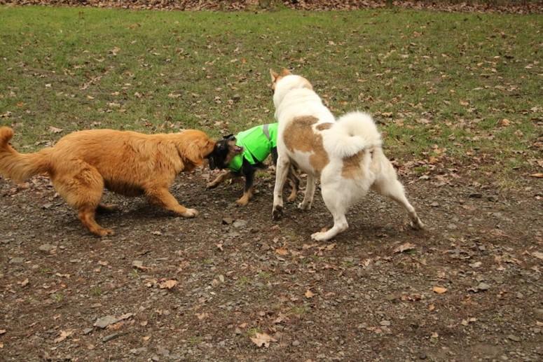 3 Z vesty ale byli nadšení hlavně všichni ostatní psiska.